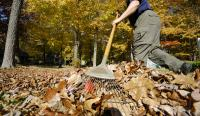 Man raking fall leaves