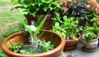 Container water garden with green plants