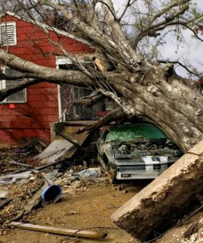 Large fallen tree crushing an old car as a result of storm damage