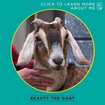 Beauty the goat thumbnail bio
