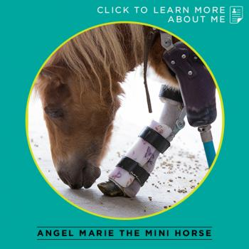 Angel Marie the Mini Horse Thumbnail
