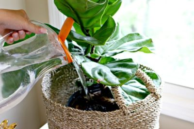 recycled container, watering can, watering plant